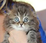 хайленд 2 месяца eridancats